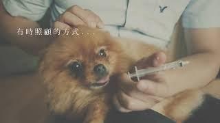 【遇见毛孩,遇见更好的自己】照顾重病宠物已经心力交瘁|作者JYC