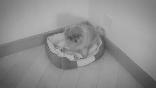 【遇见毛孩,遇见更好的自己】宠物骤逝,来不及说再见的懊悔与心碎|作者JYC